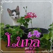 Kleine Luna