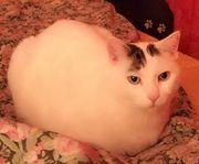 Katze Vermisst!!! Finderlohn!!!