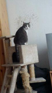 Katze 2 jahre