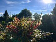 TRAUMGARTEN Gartenland in Ratingen Lintorf