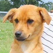 Theo, süßes Hundekind