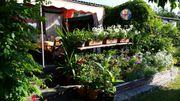 Verkaufe Kleingarten in