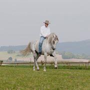 Pferde Kurs Freiarbeit Liberty mit