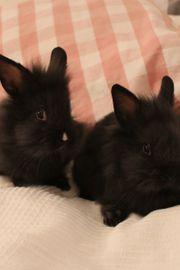 Junge Häschen Kaninchen