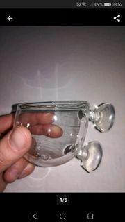 Plant Glass Pot