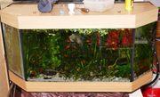 Panorama Aquarium 270 Liter mit