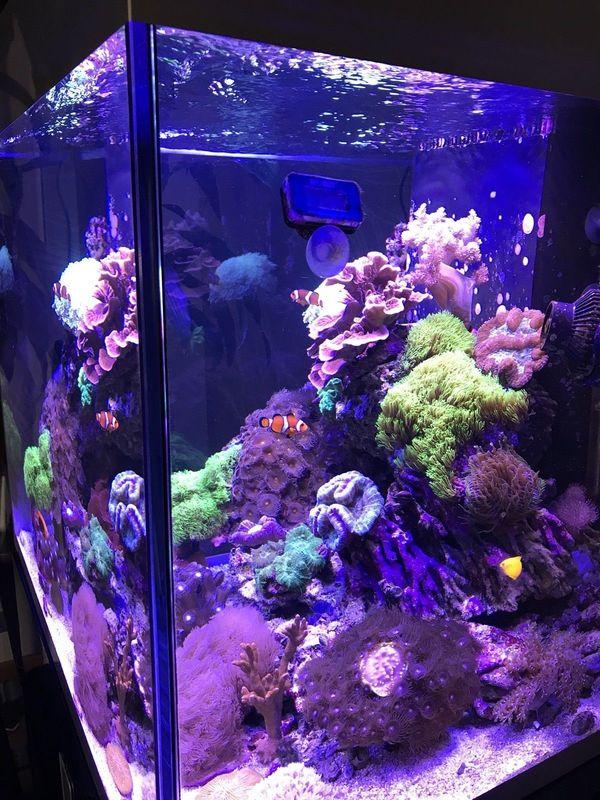 Meerwasser Aquarium Komplett In Erlangen Fische Aquaristik Kaufen