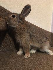 Zuckersüße junge Kaninchen abzugeben