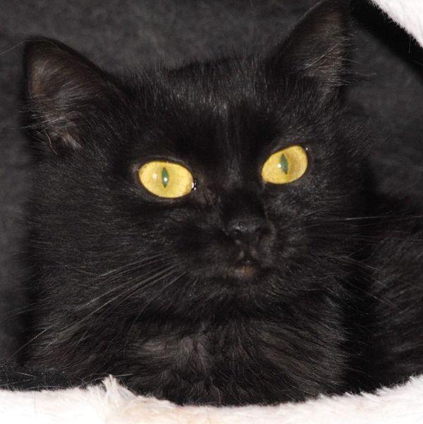 Verschmuste Katze Terry möchte gern Dein Herz erobern - Horneburg - Sonstige KatzenerwachsenCharakter: Terry ist verschmust, aber im Moment sind ihr die anderen Katzen zuviel. Da zieht sie sich zurück. Geschichte: Terry``s Besitzer ist leider an Krebs verstorben und seine Verwandten haben diese schwarze Schö - Horneburg