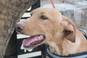 Lucero, lieber Junghund