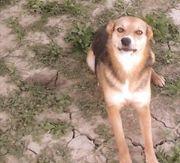 Schäferhund Mischling Maya ist einfach