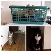 3 Stubentiger suchen neues Zuhause