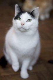 Ältere Katzendamen Suchen ein Zuhause