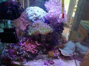Meerwasseraquarium Qube 10l