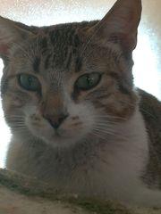 FLORA CASPAR - perfekte Familienkatzen