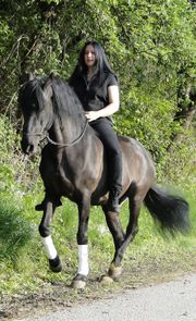Working Equitation Reitunterricht Gelassenheitstraining Kurse