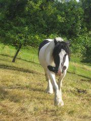 Stellplatz für leichtfuttriges Pferd