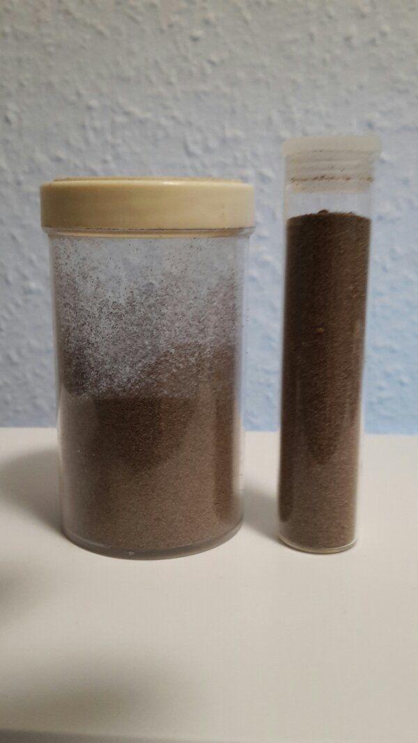 Artemia züchten