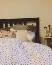Katzendamen suchen dringend