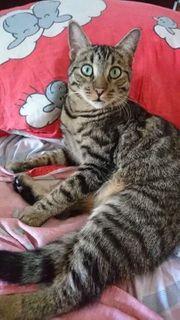 Verschiedene Junge Tierschutzkatzen suchen ihre