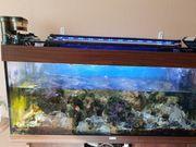 Meerwasseraquarium mit Lebendgestein und paar