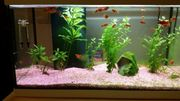 Aqvarium mit Fische