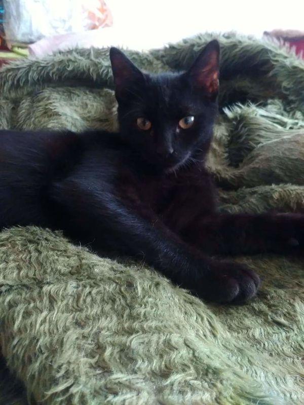 Schmusekaterchen Suny sucht liebevolles zu Hause - Malsch - MischlingskatzejungDas ist der kleine Suny. Suny ist ein eher ruhiges und entspanntes kleines Katerchen, der ein zu Hause für immer sucht. Suny spielt gerne mit den anderen Katzenkindern und kuschelt gerne mit ihnen und seinen Menschen. Suny ist - Malsch