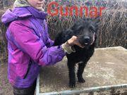 Gunnar 4 Monate alter Mischlingsrüde