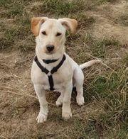 Liebes Hundemädchen Polly sucht Zuhause