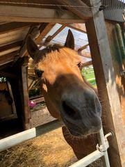 Pflegebeteiligung für Pony Honey