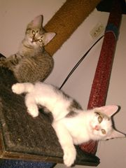 3 süße kleine Katzenmädels abzugeben