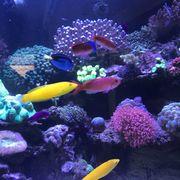 Meerwasseraquarium (Inhalt) zu
