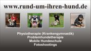 Hundephysiotherapie (Krankengymnastik), mobile