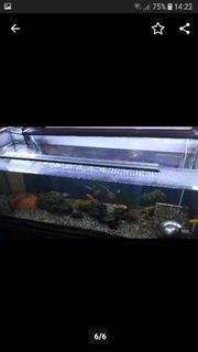 Aquarium In Schwabach Tiermarkt Tiere Kaufen Quoka De