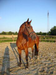 Beistellpferd für Bestplatz