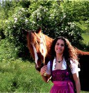 Job im Pferde-