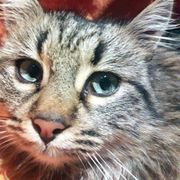Entzückendes Kätzchen Frana sucht ihre