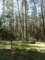 Waldgrundstück südlich vom Rothsee 2322