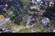 Inhalt Meerwasser Aquarium - 400 l