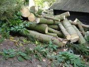 Fichtenholz