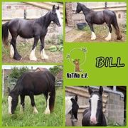 Bill - hübsches Tinker-