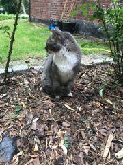 süße Katze sucht