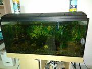 Großes Aquarium100x40x50200l2 LeuchtstoffröhrenPflegeleichte Fische