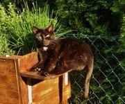 Katzenmädchen sucht Spielgefährten