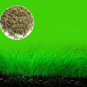 Samen Gras S ähnlich wie