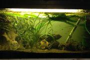Aquarium mit Fischbestand