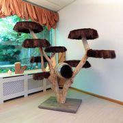 Aussen Kratzbaum, Stammholz