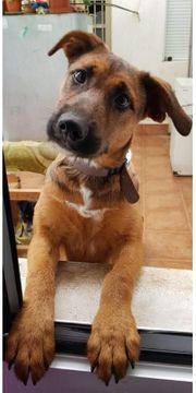 Olga - junger Hund aus dem