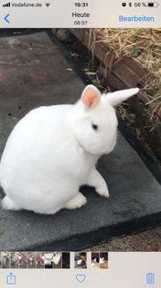 Kaninchenpärchen sucht neues