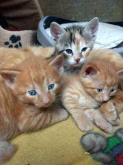 Katzenkinder zu vergeben